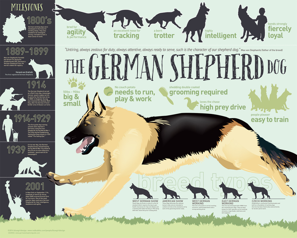 Amazing infographic on what the German Shepherd breed exists for.